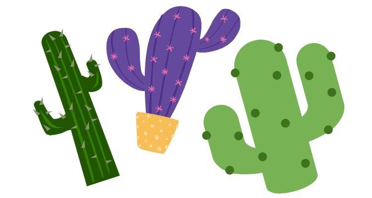 Kaktusna vlakna